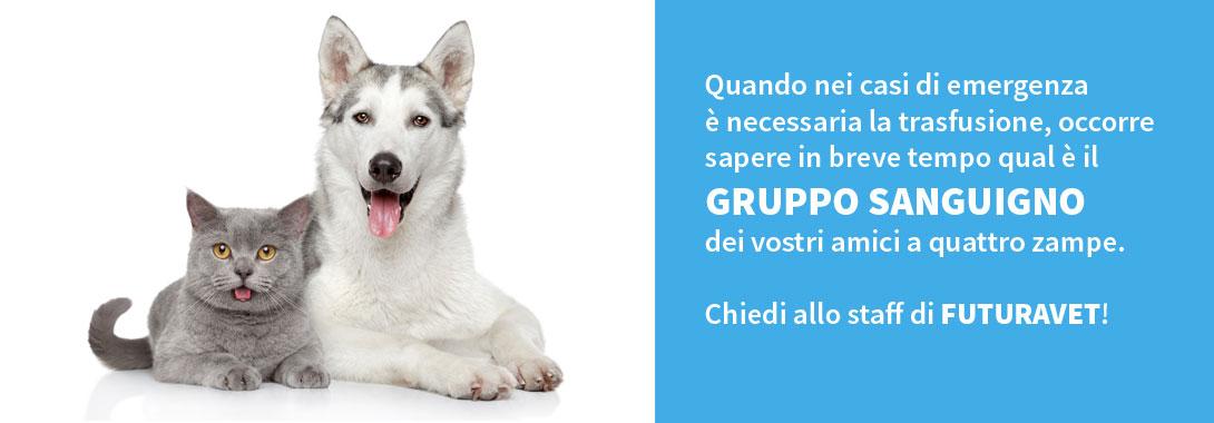 Determinazione gruppo sanguigno del cane e del gatto - Clinica Futuravet