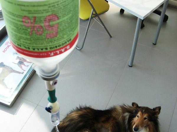 Chemioterapia cane