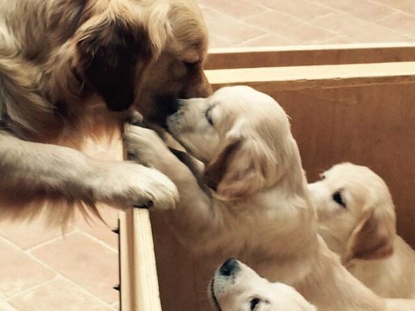 Cuccioli da fecondazione assistita