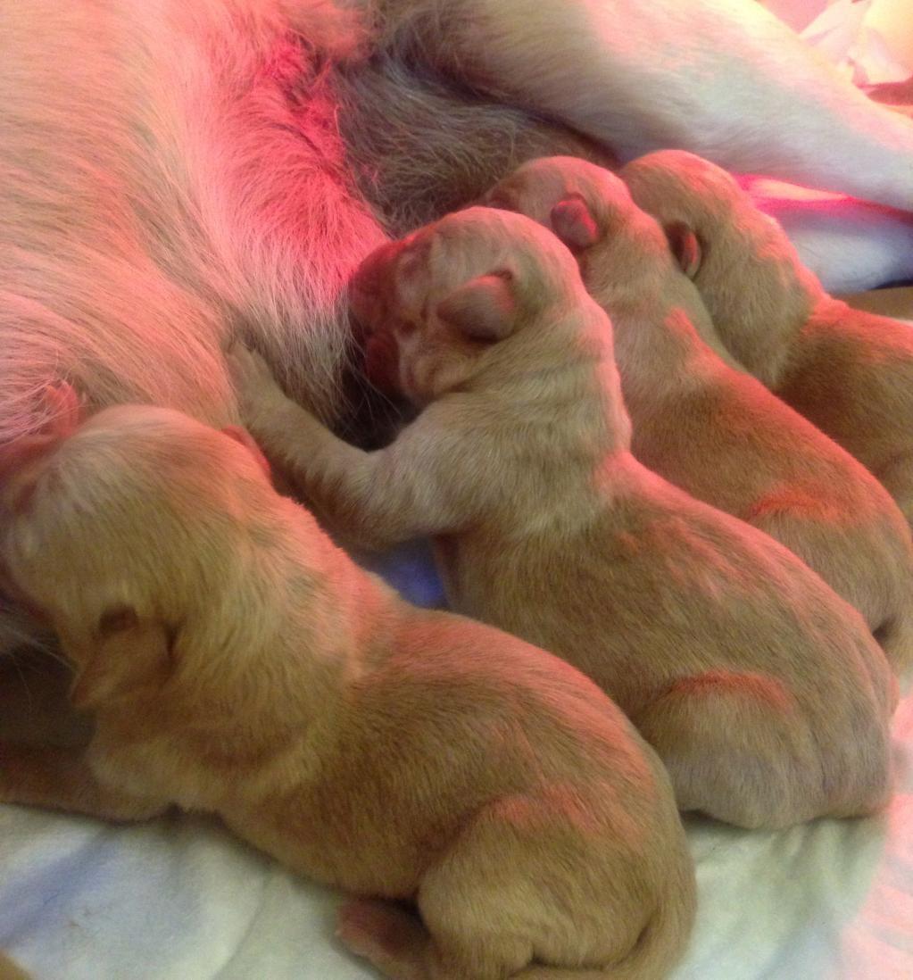 ricongiungimento cuccioli