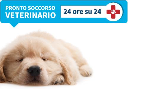 Pronto soccorso veterinario | Futuravet Clinica Veterinaria Tolentino | Marche