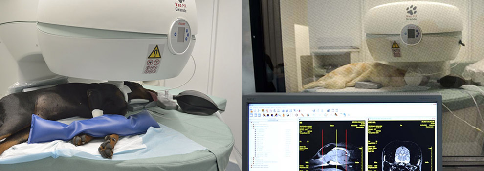 Risonanza magnetica cane | Futuravet Clinica Veterinaria Tolentino | Marche