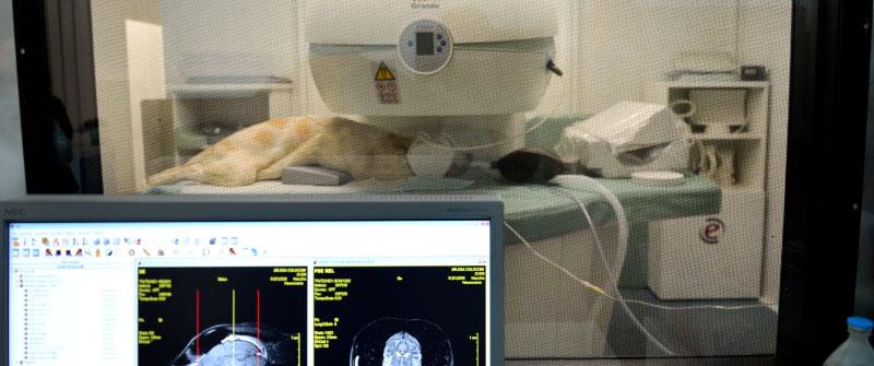futuravet clinica veterinaria tolentino diagnostica per immagini cane e gatto tac