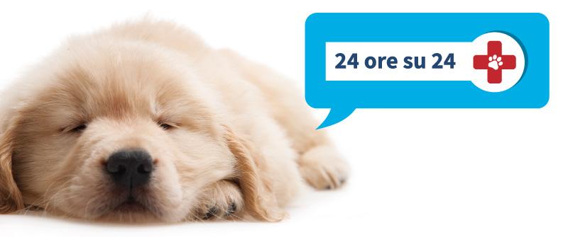pronto soccorso veterinario tolentino futuravet clinica veterinaria 24 ore su 24