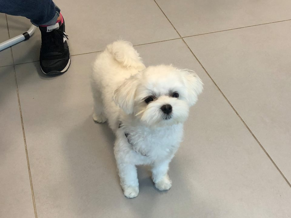 Shunt vascolare nel cane - Clinica Veterinaria Futuravet