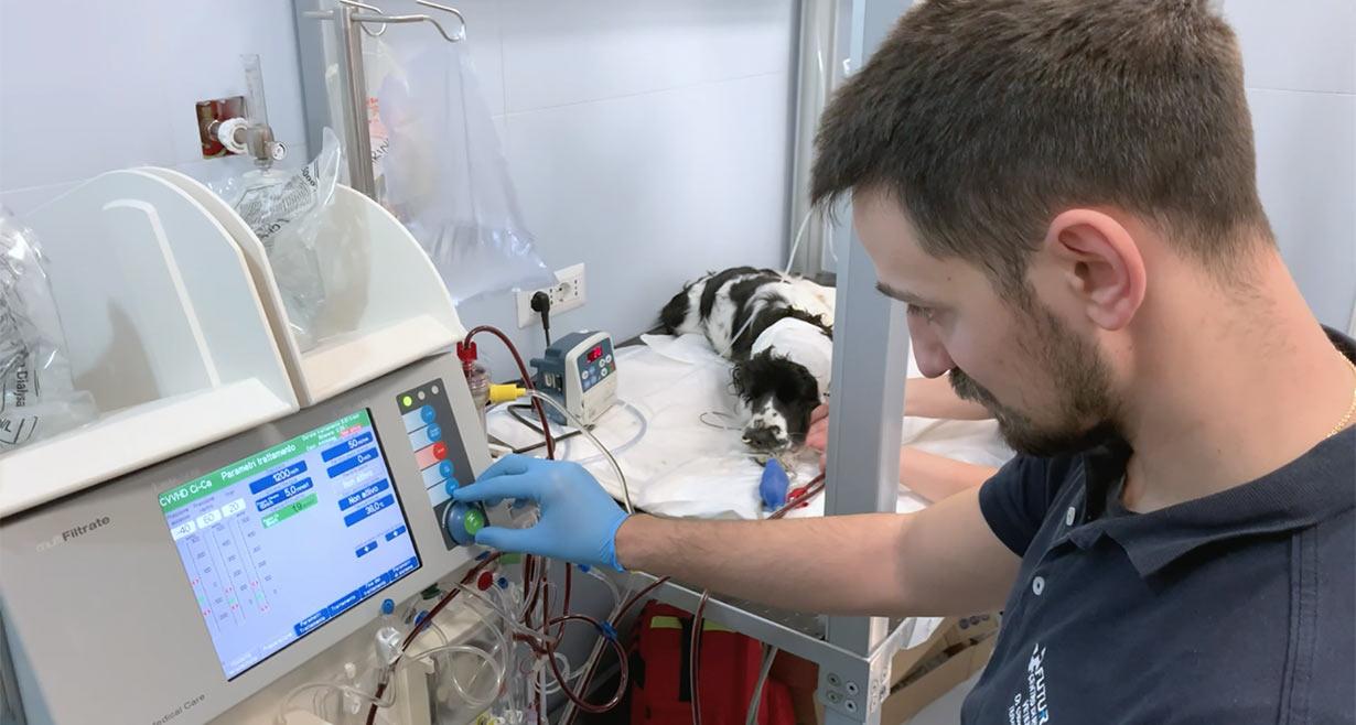Clinica Veterinaria Futuravet servizio di emodialisi e plasmaferesi per cani e gatti