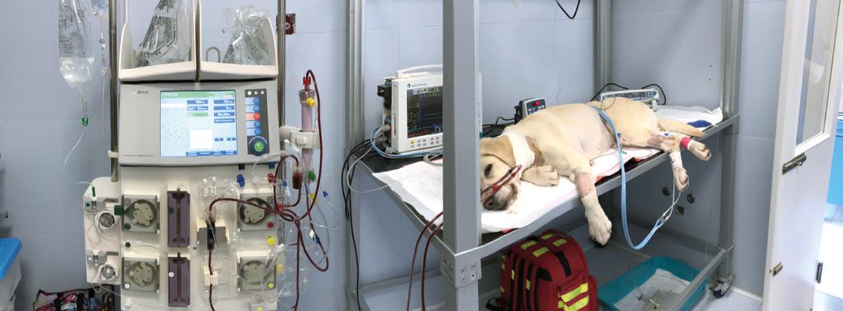 Clinica Veterinaria Futuravet servizio di emodialisi e plasmaferesi per animali