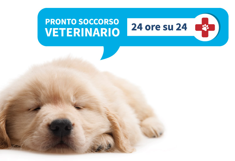 Futuravet pronto soccorso veterinario 24 ore su 24 e terapia intensiva