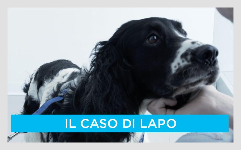 Il morso di vipera nel cane: il caso di Lapo
