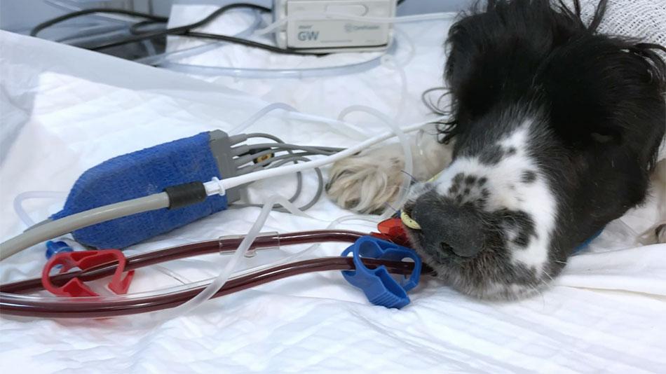 Il morso di vipera nel cane - Clinica Veterinaria Futuravet