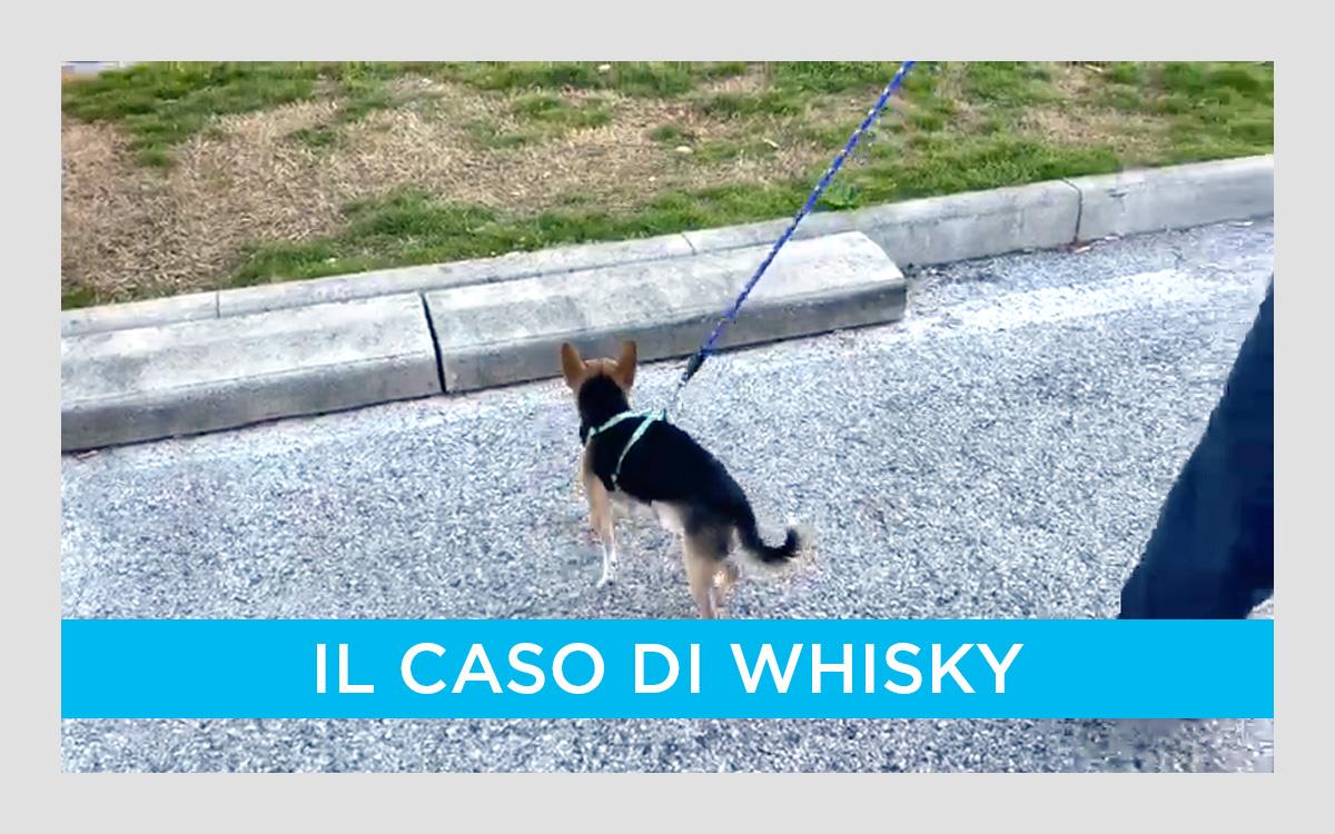 Il caso di Whisky: il cagnolino dell'indignato più indignato d'Italia