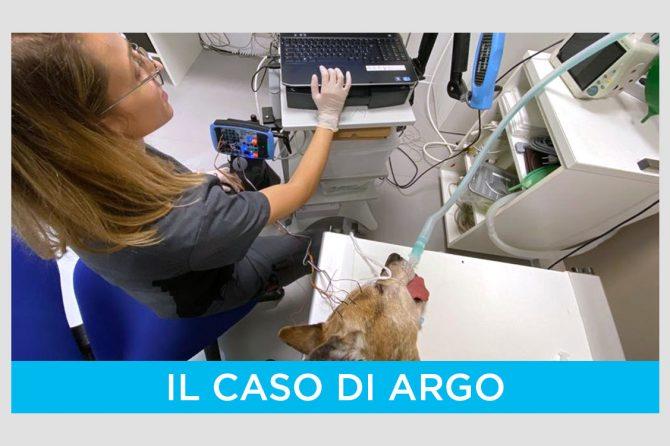 Epilessia idiopatica: il complesso caso del cane Argo