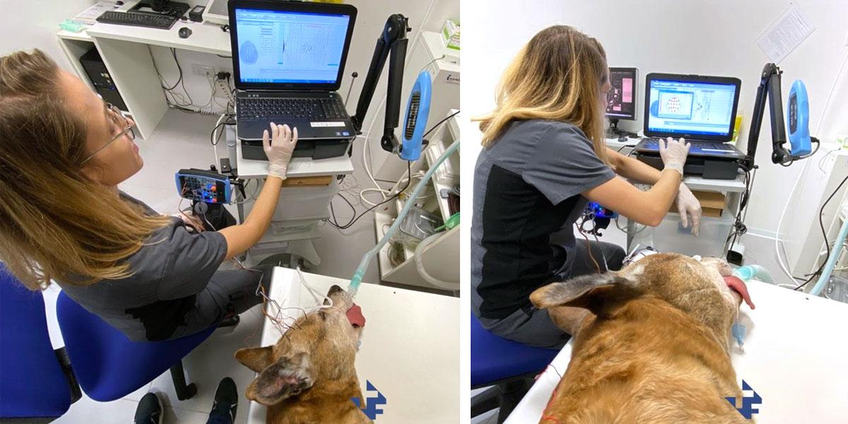 Epilessia idiopatica nel cane: il monitoraggio continuo elettroencefalografico. Futuravet Clinica Veterinaria a Tolentino