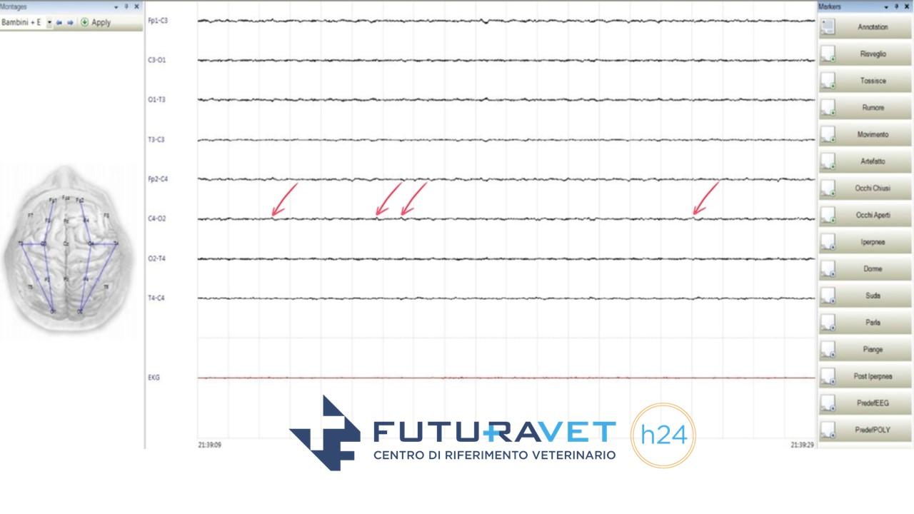 Epilessia idiopatica nel cane: il tracciato elettroencefalografico. Futuravet Clinica Veterinaria a Tolentino