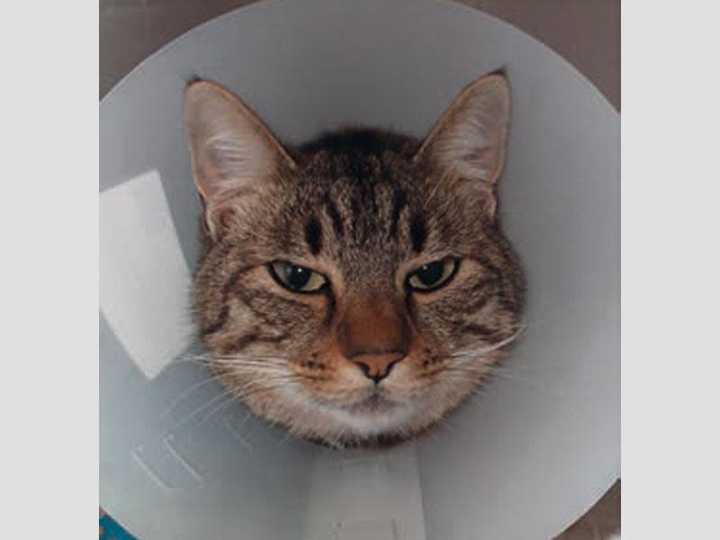 Un caso di pneumopatia cisto-bollosa in un gatto